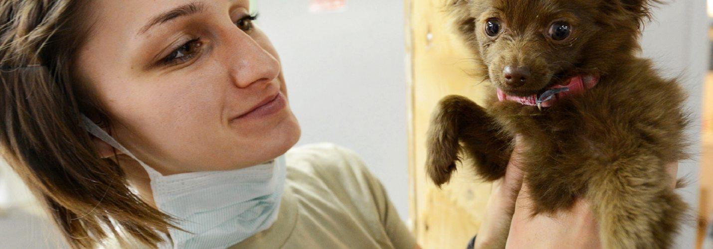 Tiermedizinische Fachangestellte – wirklich ein Traumberuf?