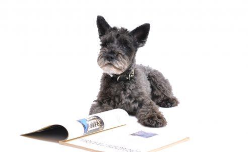 Berufliche Perspektiven nach Deiner Ausbildung zur Tiermedizinischen Fachangestellten
